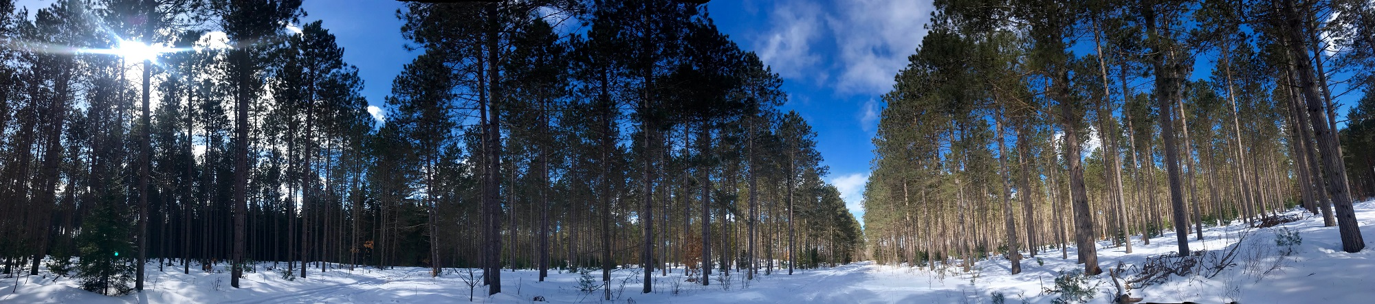 County Forest Winter Pano 1.jpg