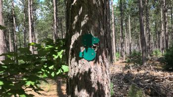Pines Loop Sign